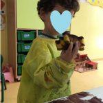 castanhas-colegio-a-flor-outono-2020